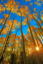 Preview iPhone wallpaper Colorado, autumn, aspen, forest, trees, sun rays, USA