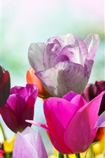 Preview iPhone wallpaper Colorful tulips, different colors flowers
