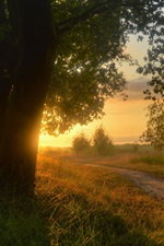 Preview iPhone wallpaper Countryside, Lower Saxony, Germany, trees, road, grass, sunset