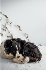 Preview iPhone wallpaper Dog rest in winter snow