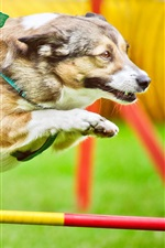 Preview iPhone wallpaper Dog running, jumping