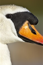Preview iPhone wallpaper Duck head close-up, beak, eyes, water drops