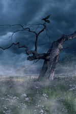 Preview iPhone wallpaper Fog, trees, clouds, grass, bird, dawn