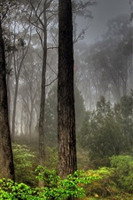 Preview iPhone wallpaper Fog, trees, forest, grass, nature