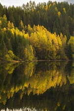 Preview iPhone wallpaper Forest, lake, water reflection, autumn