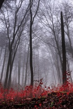 Preview iPhone wallpaper Forest, trees, fog, dawn, autumn