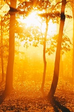 Preview iPhone wallpaper Forest, trees, sunrise, sunshine