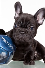 Preview iPhone wallpaper French bulldog, black dog, football
