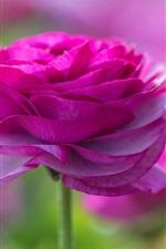 Flores de jardim, rosa pétalas, rosa, tronco