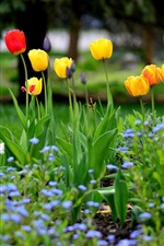Preview iPhone wallpaper Garden flowers, spring, tulips, yellow red purple