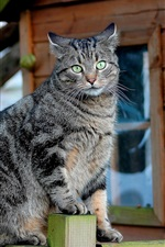 Preview iPhone wallpaper Green eyes gray kitten standing on the fence