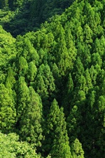 Preview iPhone wallpaper Green forest, trees, top view