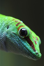 Preview iPhone wallpaper Green lizard, gecko, animal photography