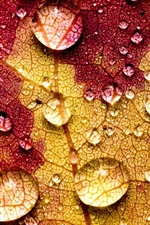 Preview iPhone wallpaper Leaf macro photography, veins, water drops
