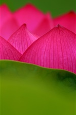 Preview iPhone wallpaper Lotus, pink petals, flower close-up, green leaf