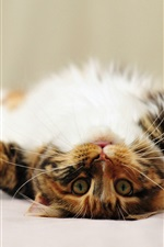 Preview iPhone wallpaper Lovely kitten, face, paws