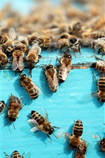 iPhone обои Много пчел, насекомых, улей
