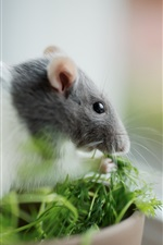 Preview iPhone wallpaper Mouse and grass