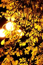 Preview iPhone wallpaper Night, lights, autumn, tree, leaves