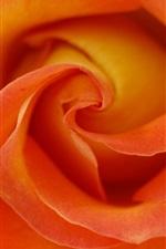미리보기 iPhone 배경 화면 오렌지 꽃잎, 장미 매크로 사진