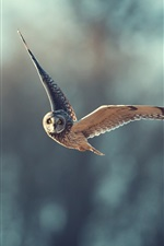 Preview iPhone wallpaper Owl flight, blurry background