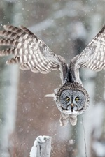 Preview iPhone wallpaper Owl flight, wings, winter, snow