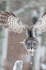 iPhone обои Сова полет, крылья, зима, снег