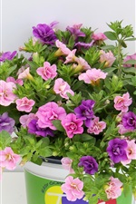 Preview iPhone wallpaper Pink and purple flowers, vase