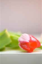 Preview iPhone wallpaper Pink flower, tulip, table, blurry