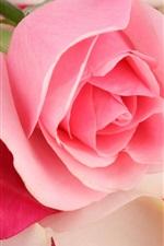 iPhone壁紙のプレビュー ピンクのバラのクローズアップ、花、花びら