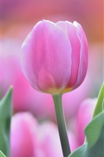 Preview iPhone wallpaper Pink tulip flower bud, leaf, focus photography