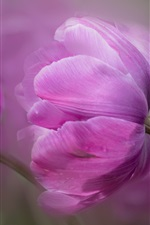 Preview iPhone wallpaper Purple tulips macro photography, petals