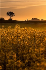Preview iPhone wallpaper Rape field, sunset, glare