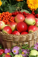 Red apples, berries, basket, flowers