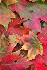 Preview iPhone wallpaper Red maple leaves, ground, autumn