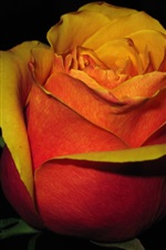 Preview iPhone wallpaper Red orange petals rose flower in the darkness