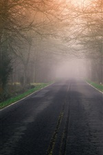 Preview iPhone wallpaper Road, fog, trees, morning