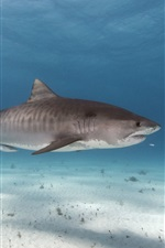 Sea animals, shark, underwater