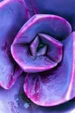 Preview iPhone wallpaper Succulent plants, purple petals