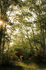 Preview iPhone wallpaper Summer, forest, trees, sun rays, beautiful nature