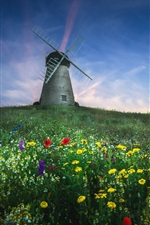 Summer, wildflowers, windmill, blue sky