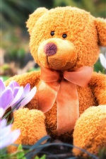 Preview iPhone wallpaper Teddy bear, toy, crocuses, spring