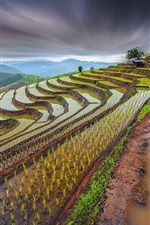 Preview iPhone wallpaper Thailand beautiful countryside scenery, rice terraces