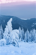 Preview iPhone wallpaper Trees, forest, thick snow, dusk, winter