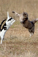 Preview iPhone wallpaper Two cats jumping in the grass