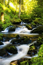 Preview iPhone wallpaper Water stream in the forest, creek, stones, trees, sun rays