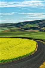 Wheat and rape field, country road, countryside, Palouse, USA