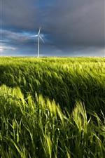 Wheat field, windmills, summer