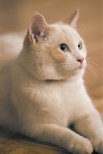 Preview iPhone wallpaper White cat stay on the flooring