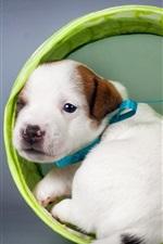Filhote de cachorro branco olhar para trás